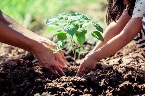Turkish Initiative Underway to Plant Trees in Arid Somalia